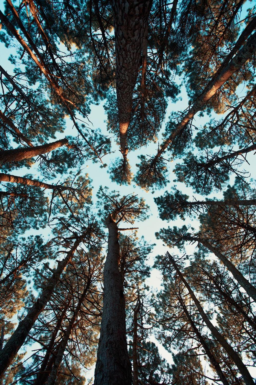 low angle photo ot green trees