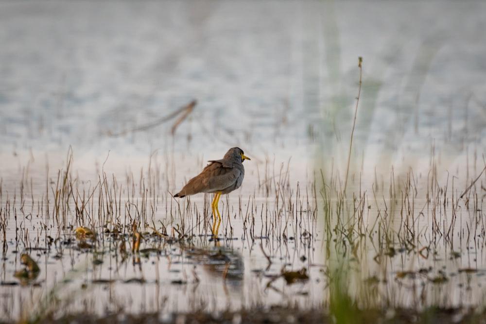 shallow focus photography of gray bird