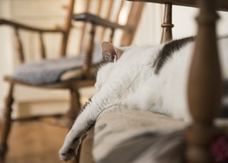 macro photography of short-fur white and black cat sleeping