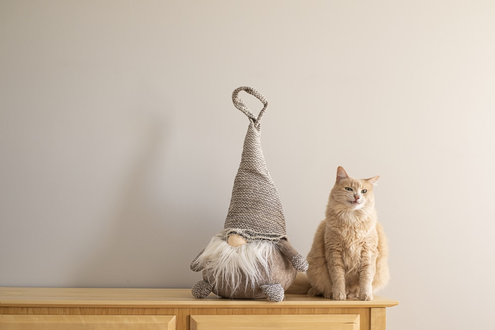 orange tabby cat beside the gnome plush toy