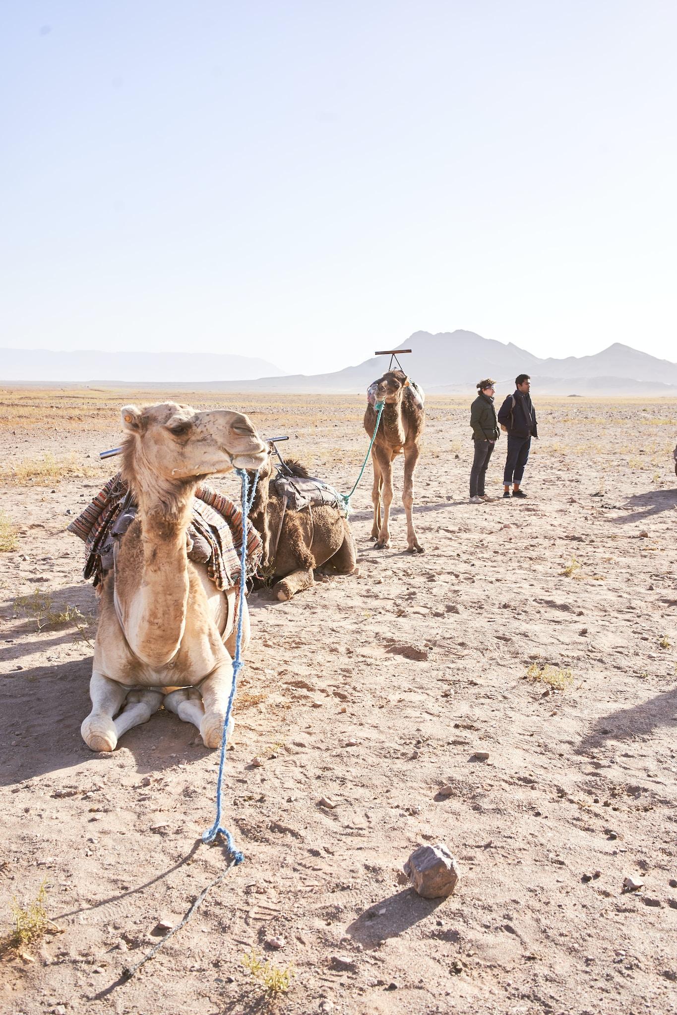 people standing beside camel on desert