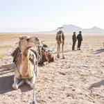 people standing beside camel on desert