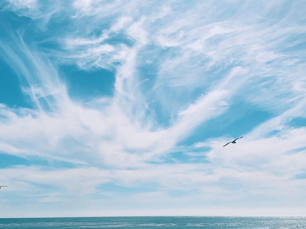 flying bird over the sea