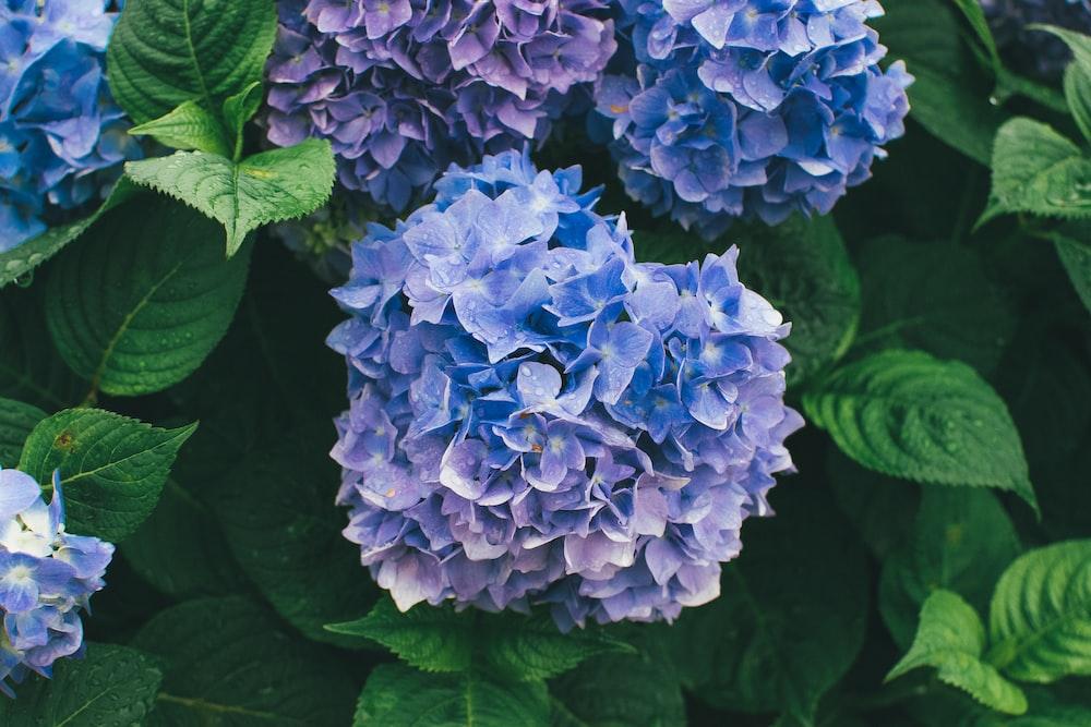 purple and blue petaled flowers