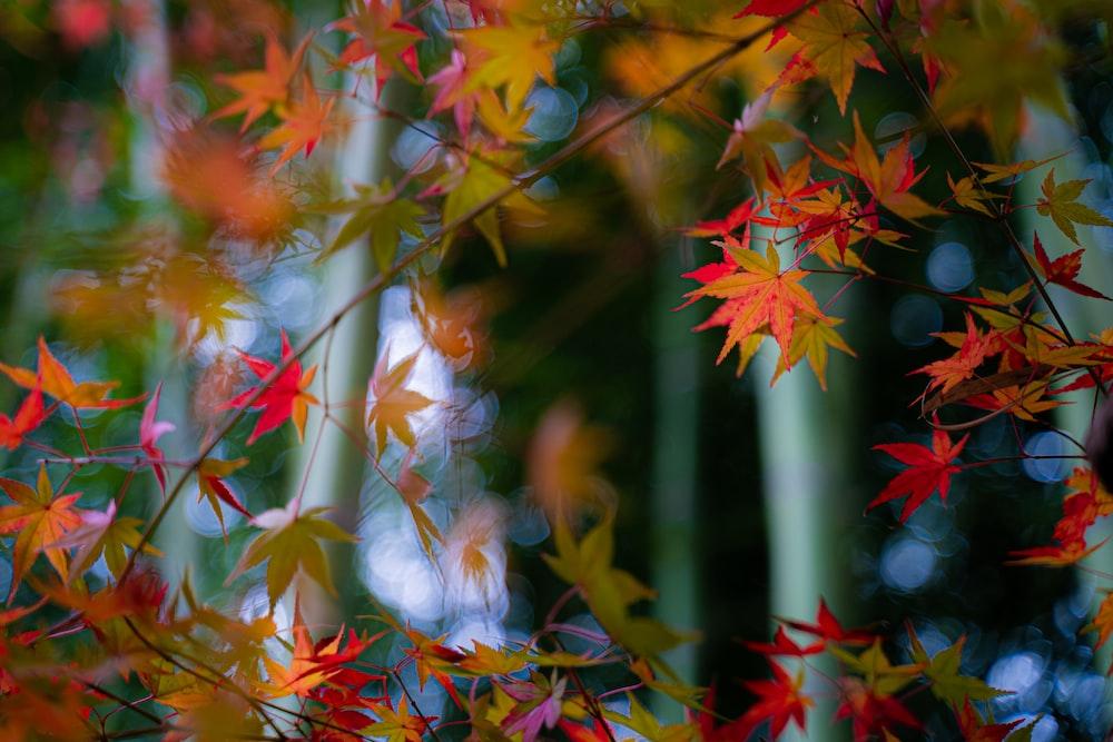 orange and green leafed tree
