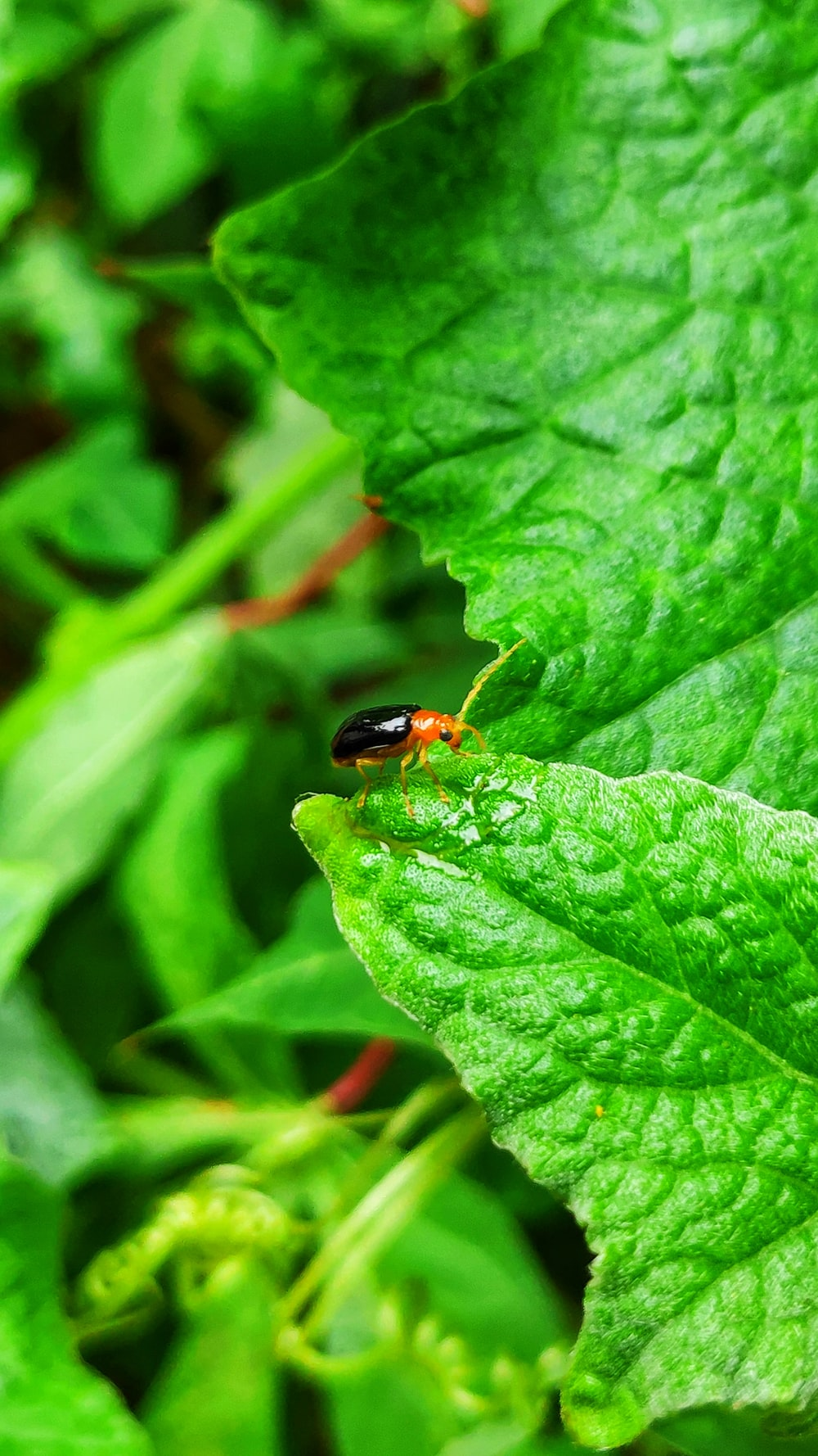 macro photography of black and brown bug on green plant