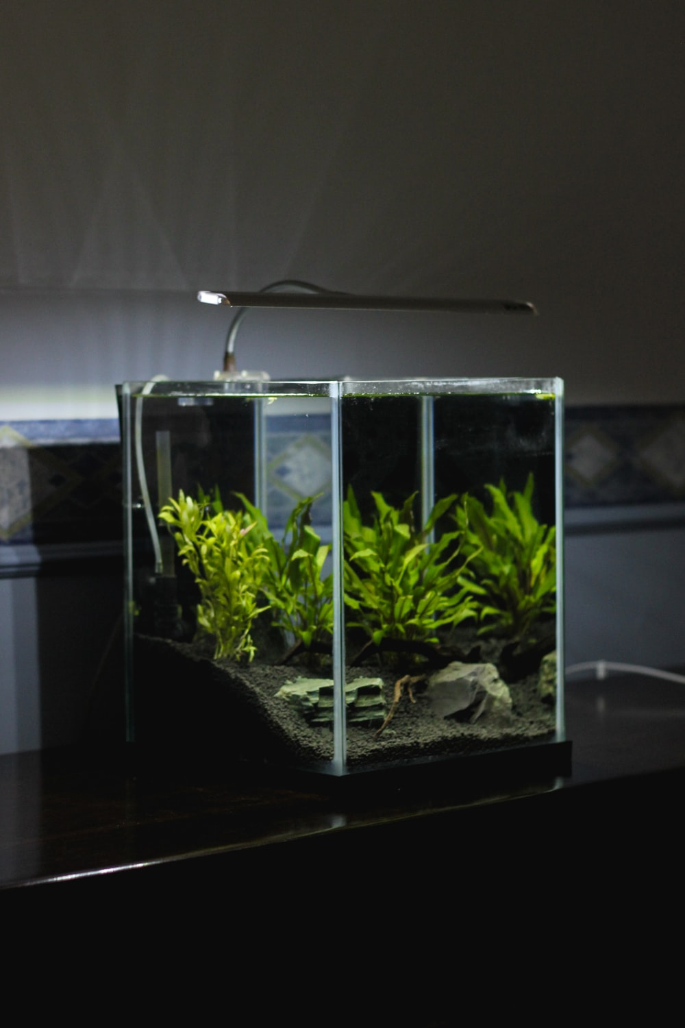 green leaf plant in clear glass terrarium with lighted lamp on top