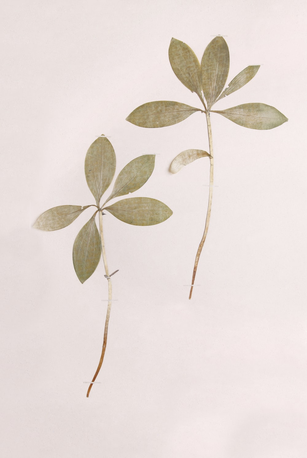 green and brown leaves illustration