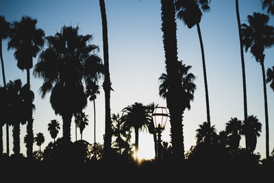 silhouette of palm trees during sunset palm-tree zoom background