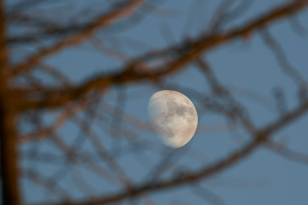 shallow focus photography of moon