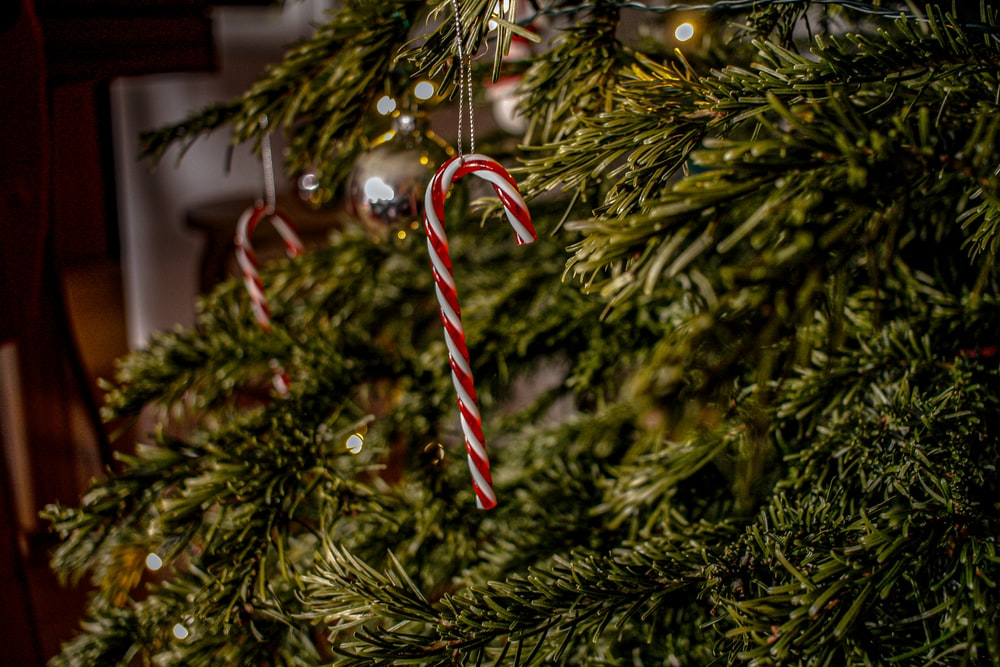 candy canes hanging on green Christmas tree