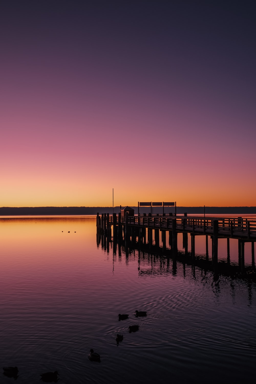 brown wooden dock bridge near body of water