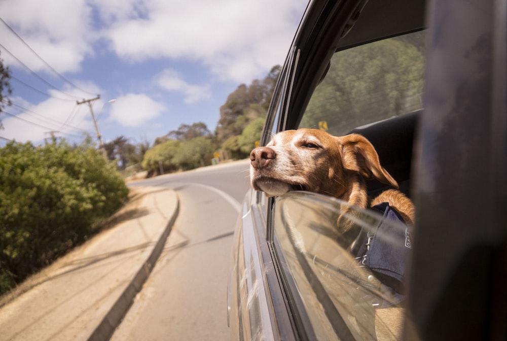 dog leaning his head on car window