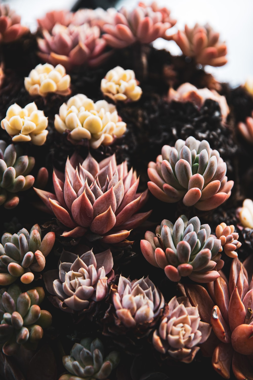 close view of succulents