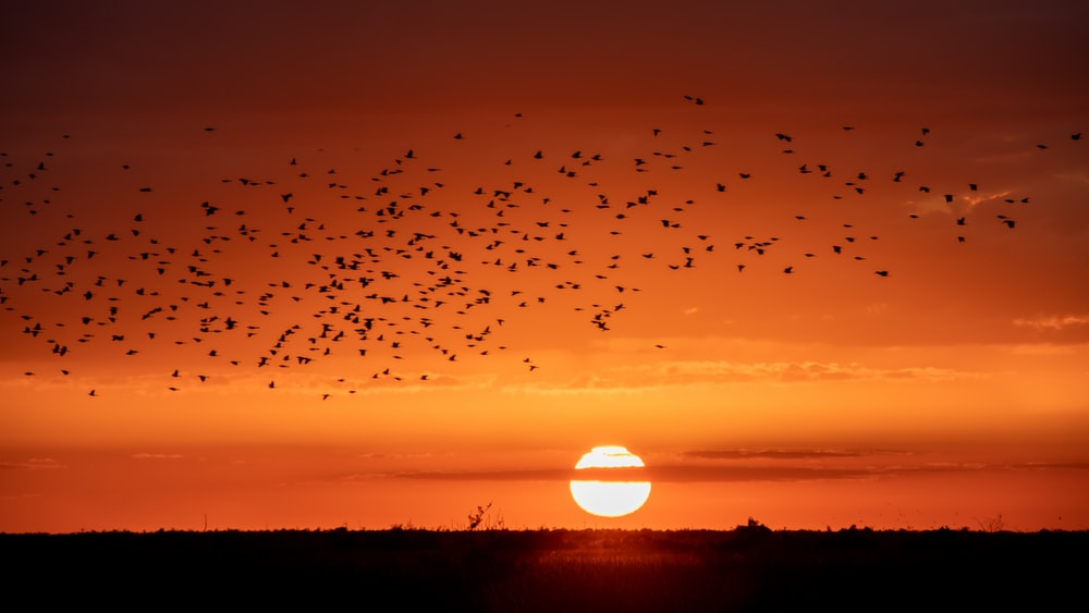 silhouette photography of birds and trees during golden hour