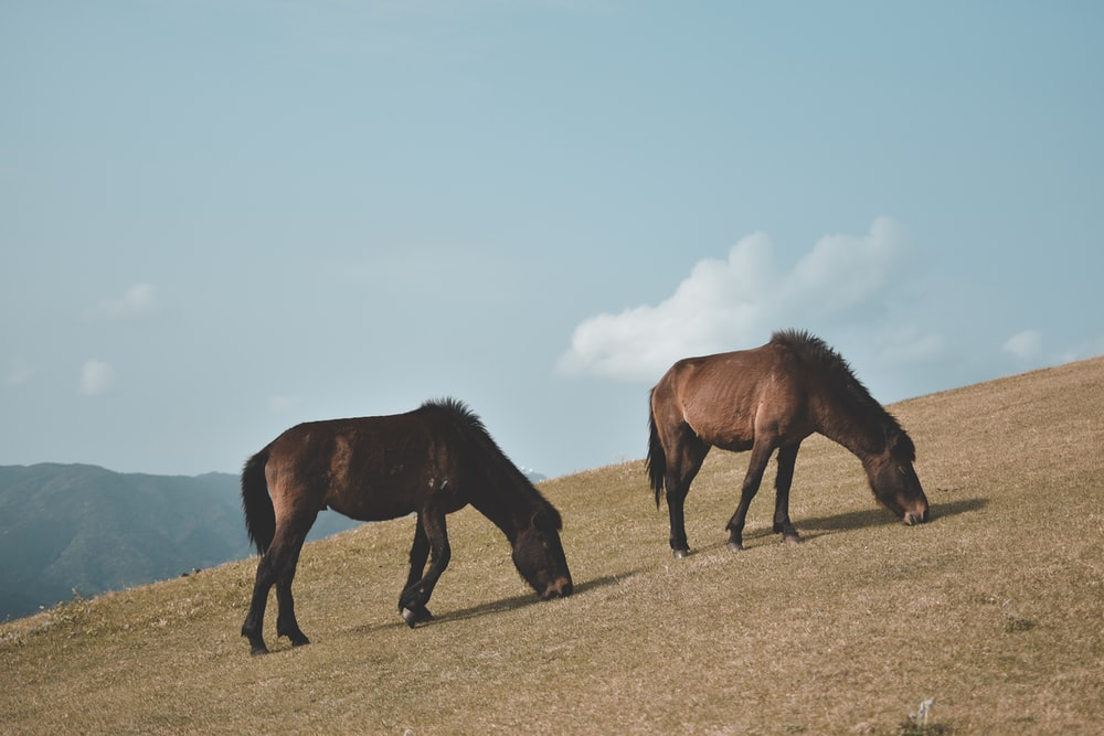 two brown horses on mountain during daytime