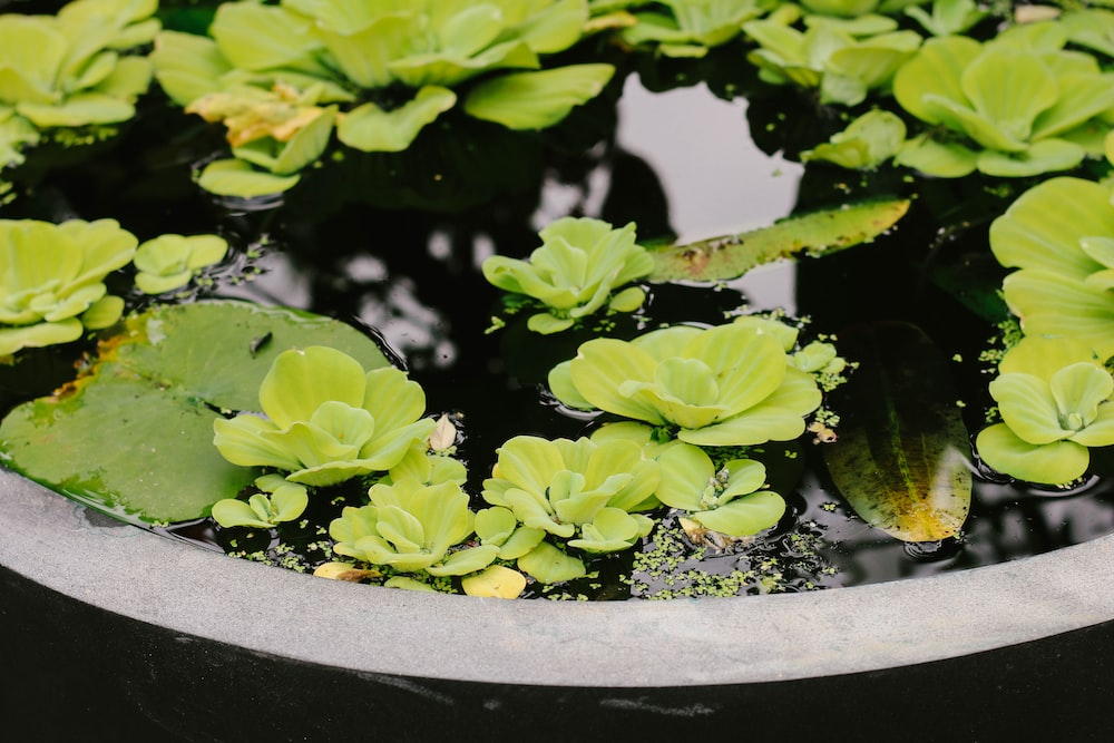 succulent plants on body of water