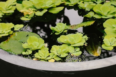 succulent plants on body of water leafy zoom background