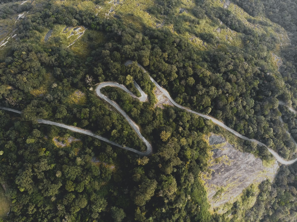 aerial photograph of road on hill between trees