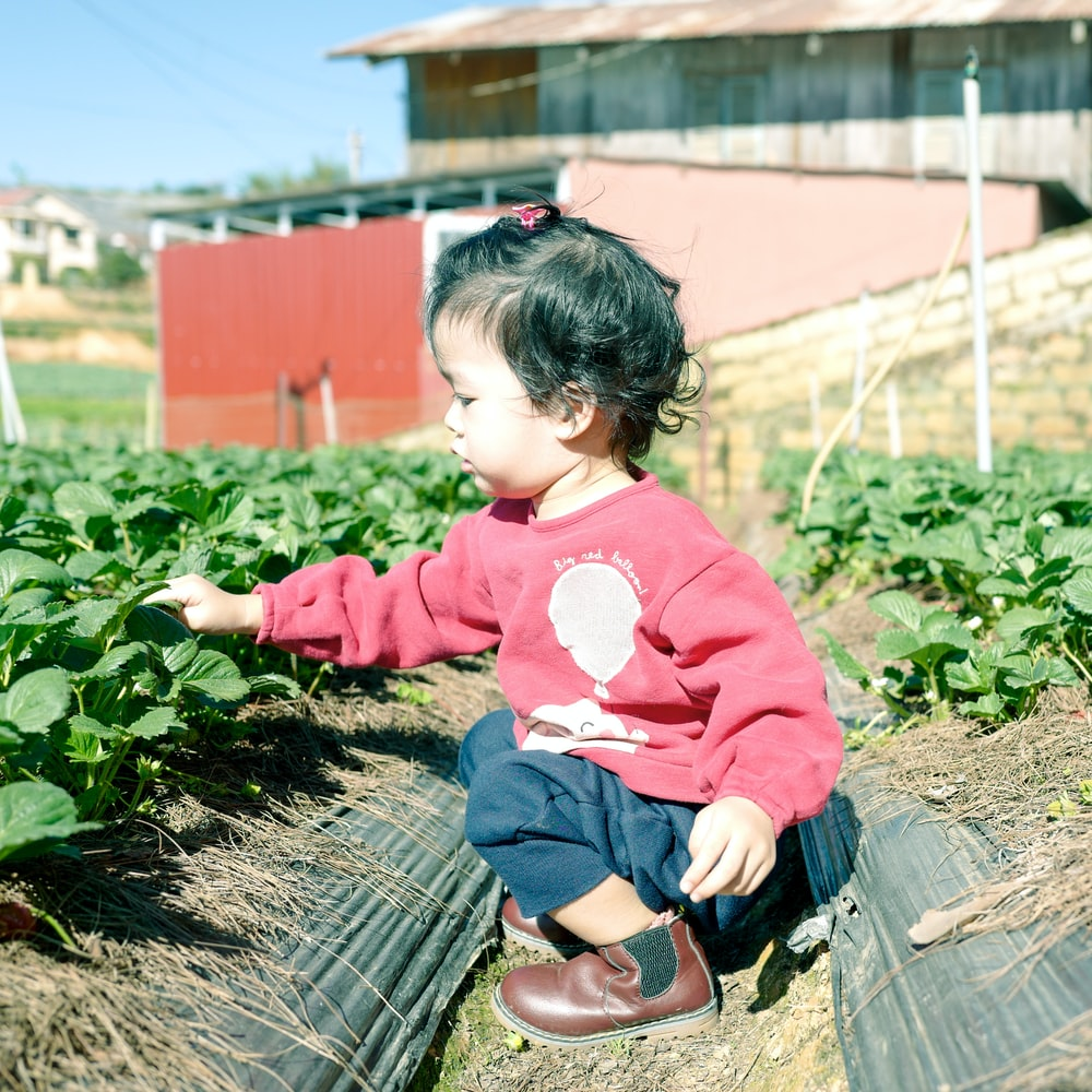 girl holding green leaf plant