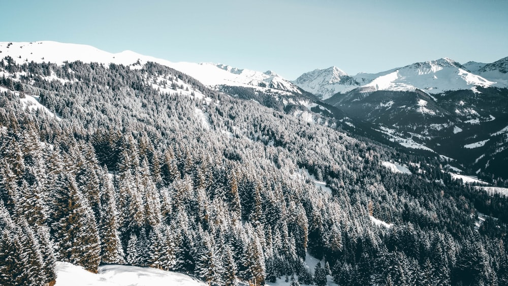 snow-covered trees and mountain