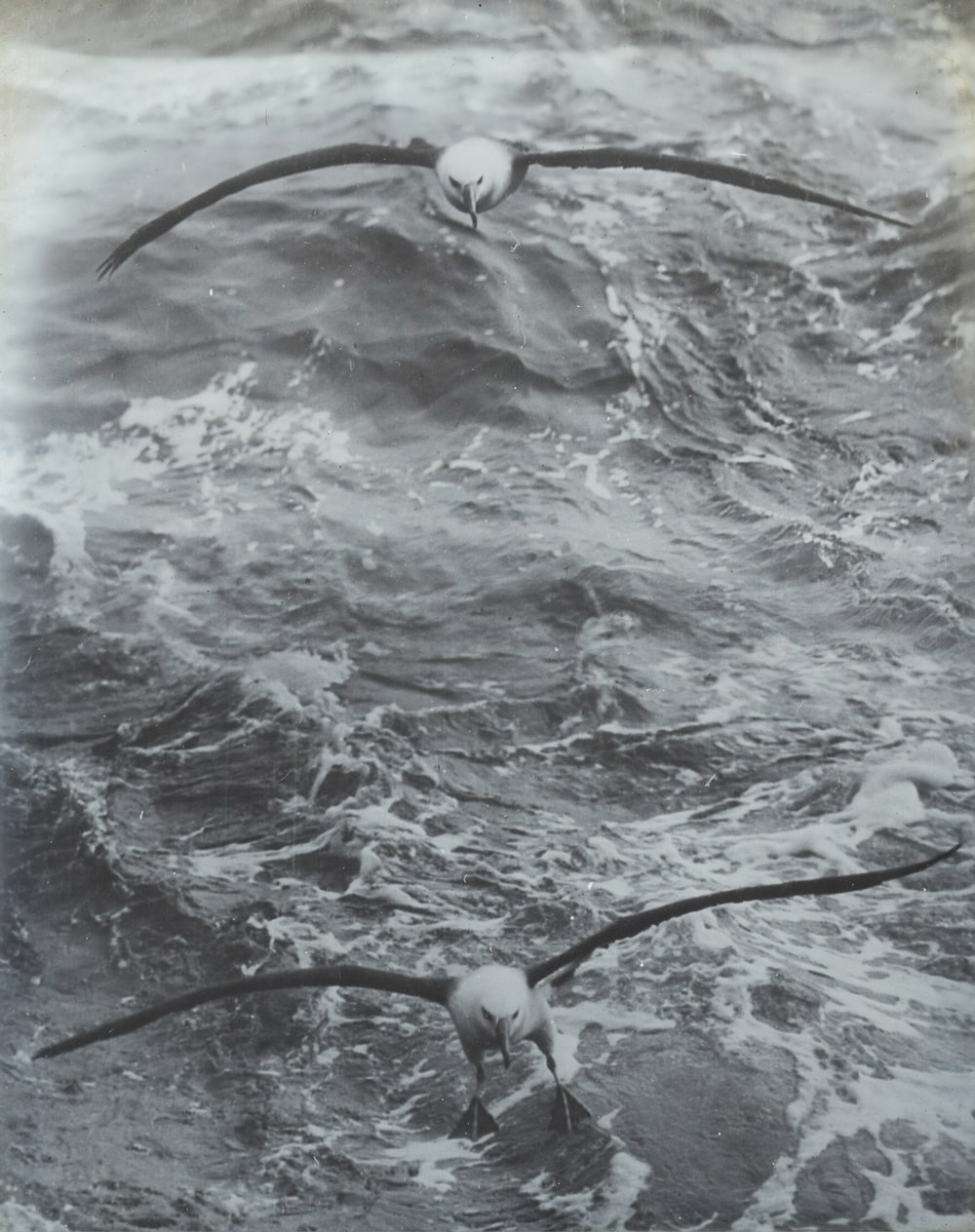 grayscale photo of birds flying above body of water