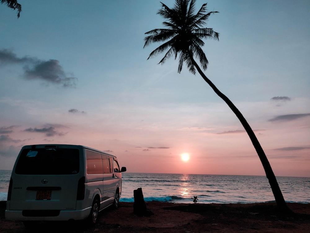 van beside green palm plant during golden hour