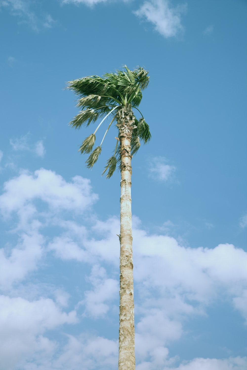 low-angle photo of palm trees under blue sky