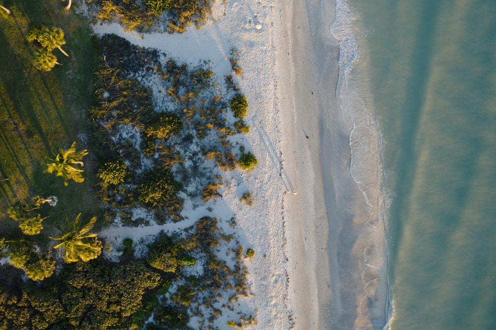 aerial view of trees on shore