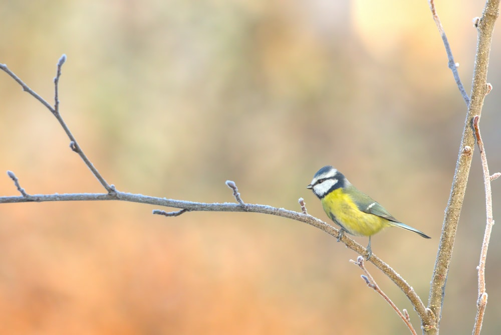 yellow and green bird on branch