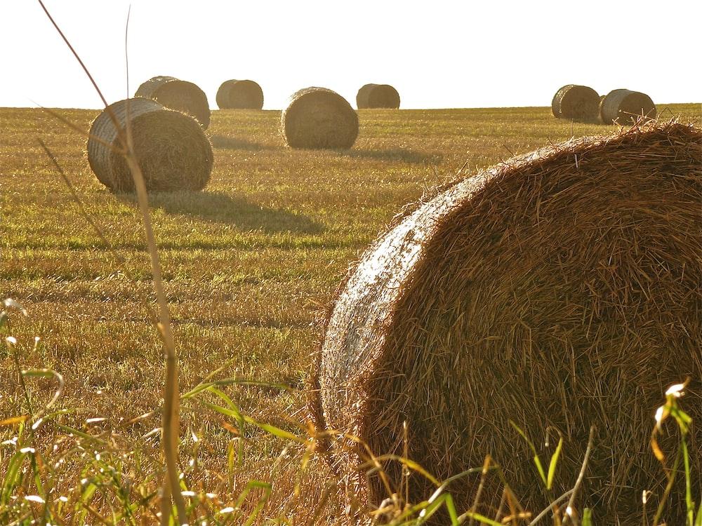 roll of hays under white sky
