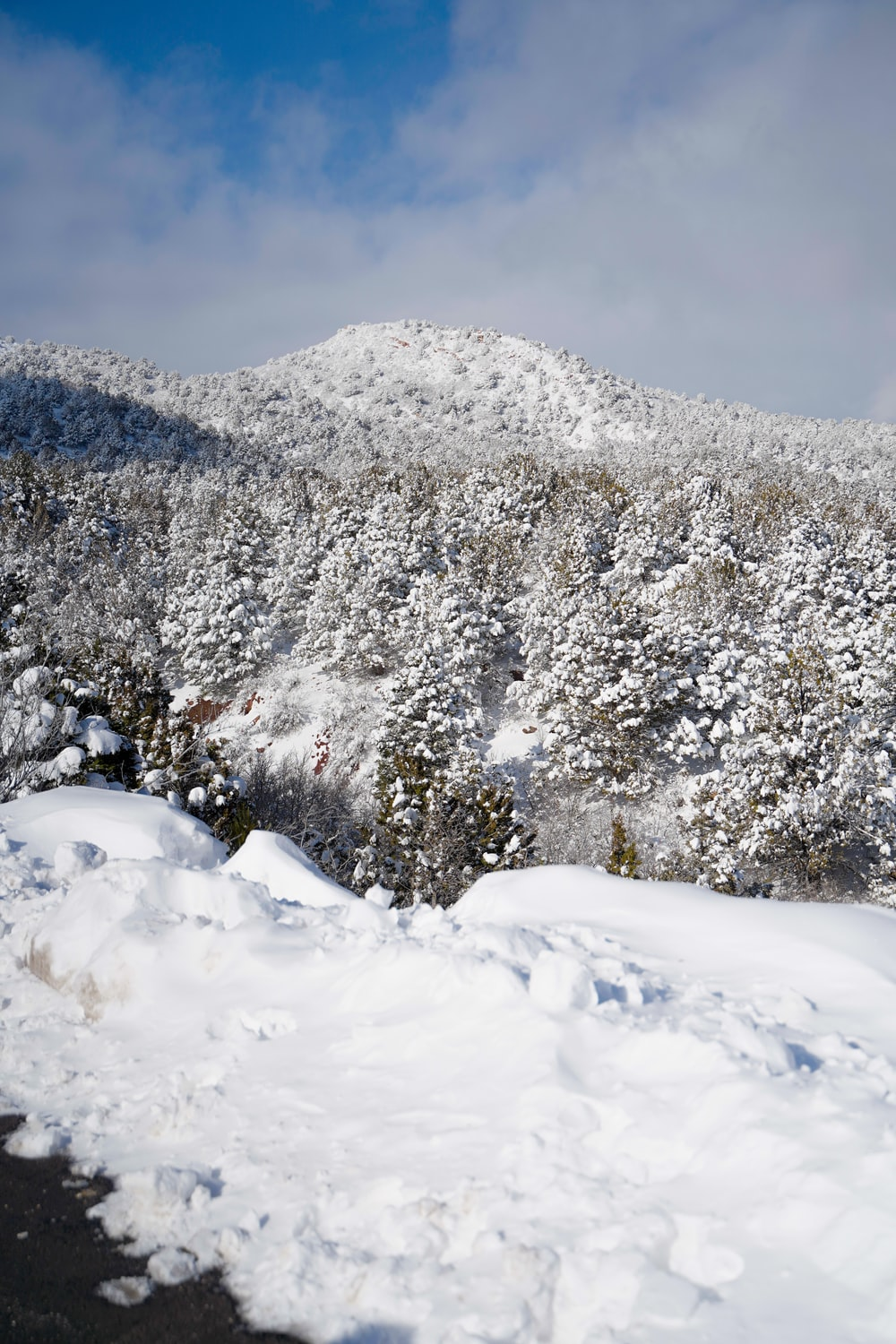 snow covered field and trees at daytime
