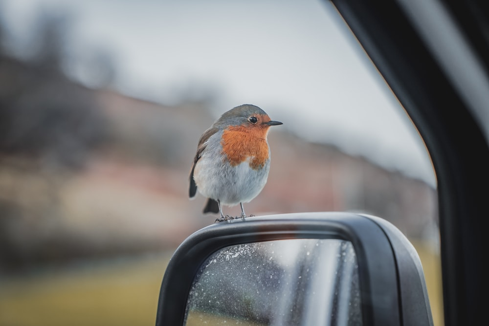 small bird perched on car side mirror