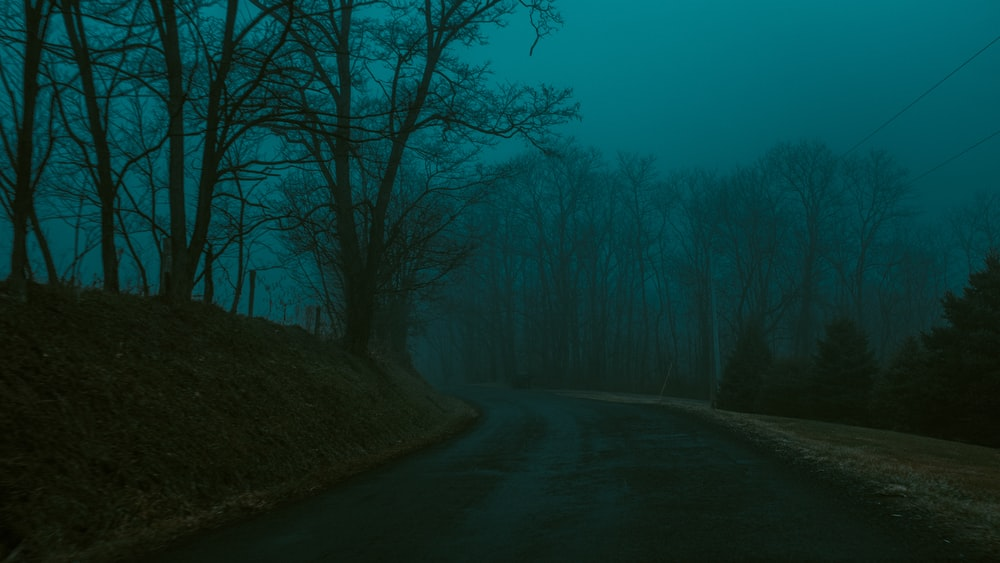 empty road by leafless during foggy weather