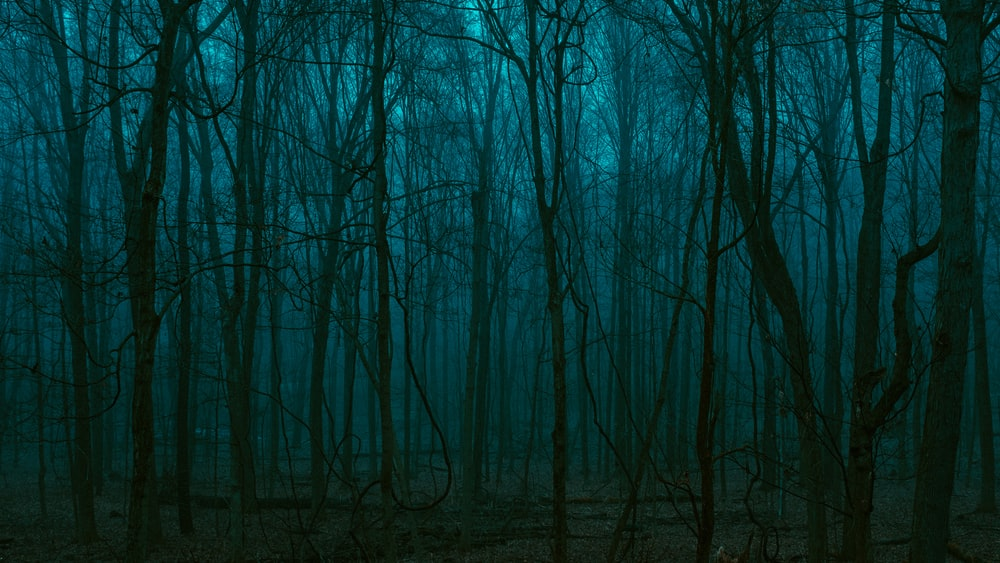 bare trees in foggy day