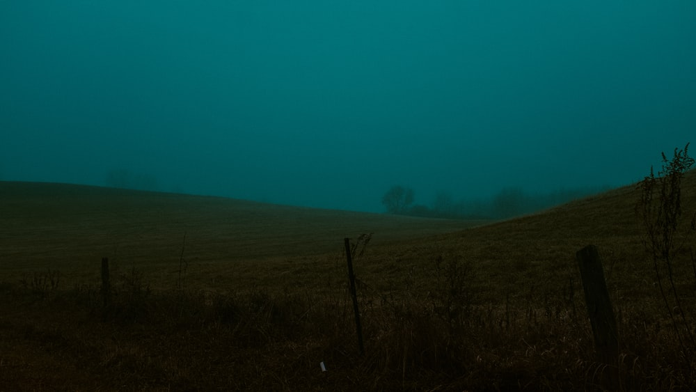 landscape photography of green field in foggy day