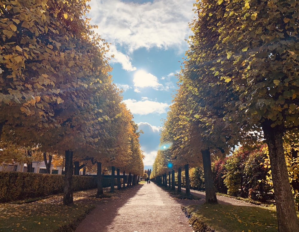 road between green trees during daytime