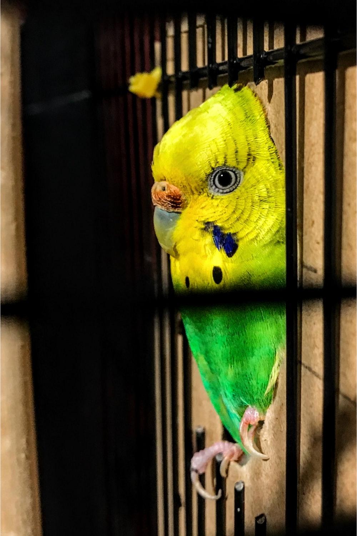 selective focus photography of green parakeet decor