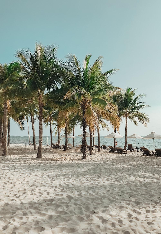 coconut trees on the beach photograph