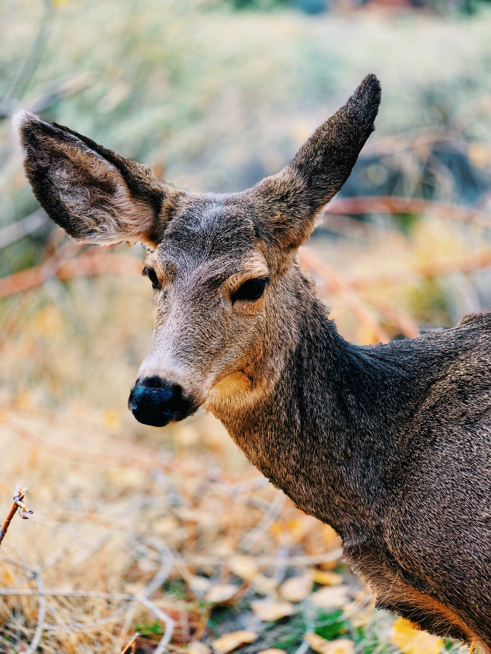 brown and gray deer