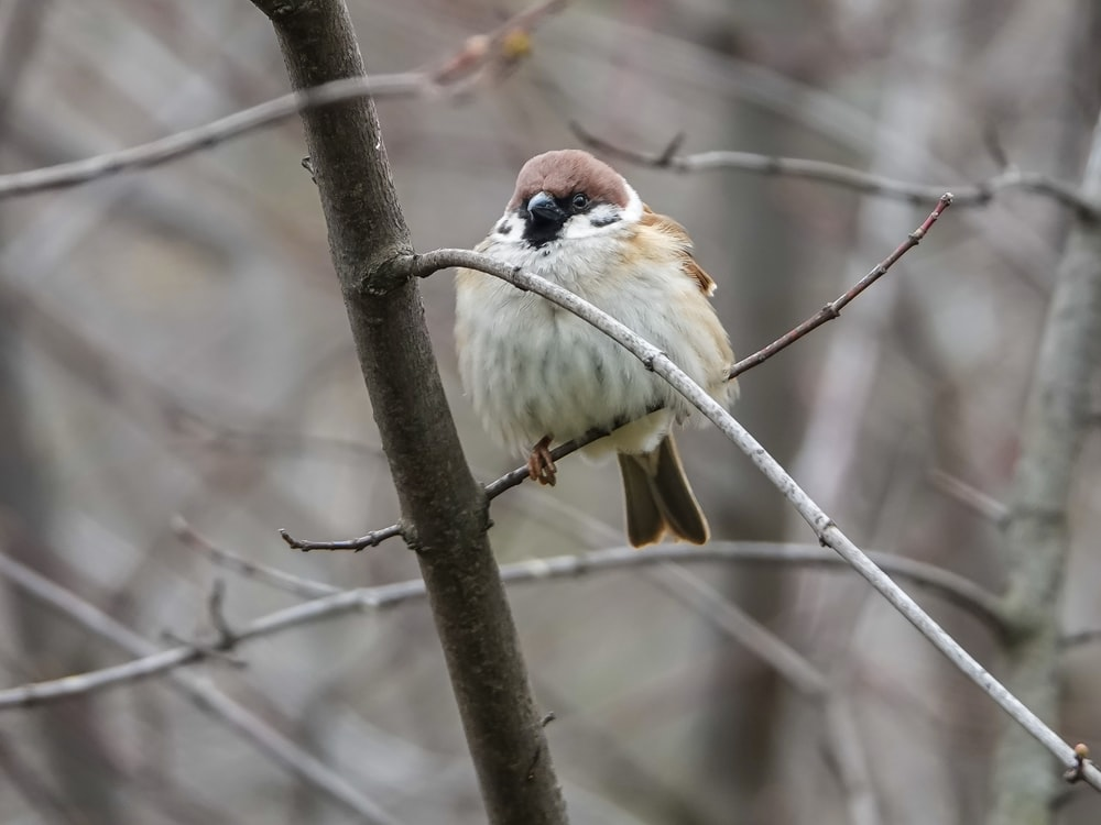 selective focus photography of small bird perched on plant branch