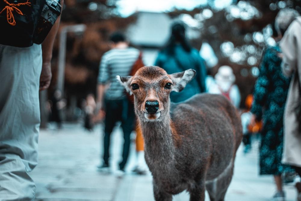 selective focus photography of deer fawn