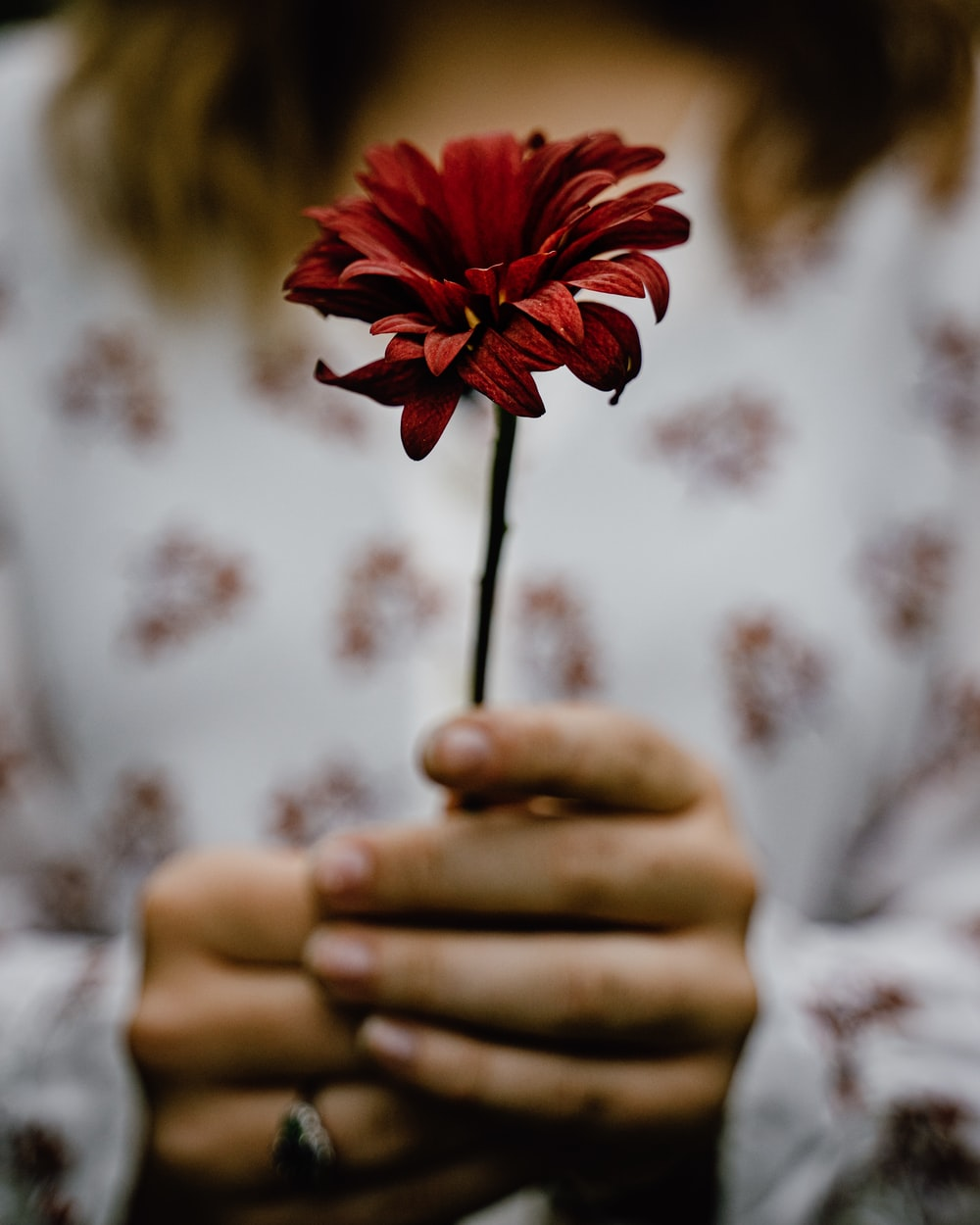 person holding red petaled flower
