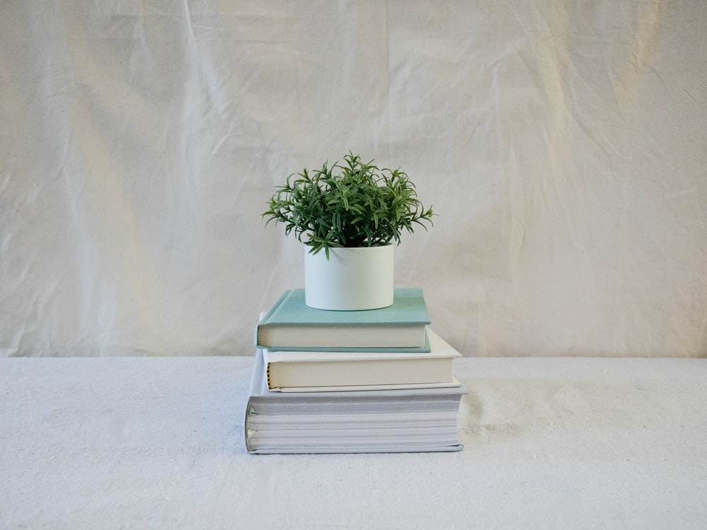 three piled books and plant