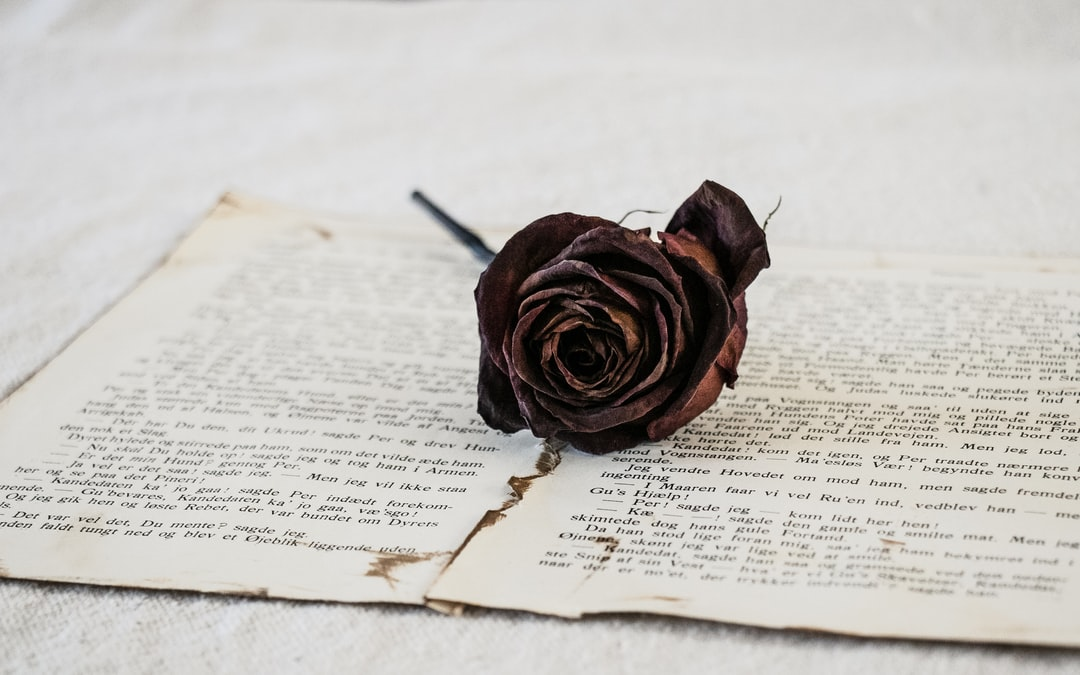 Rose On Book Pages - unsplash
