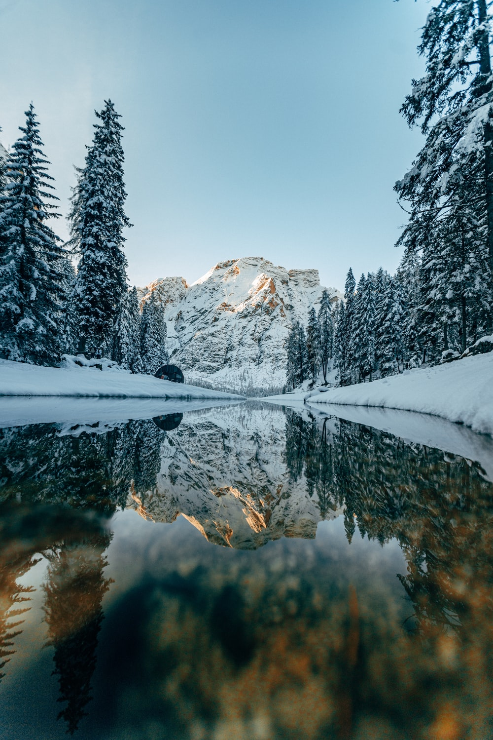 river surrounded by trees covered with snow