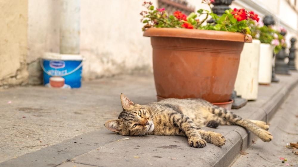 brown tabby cat near the flower p