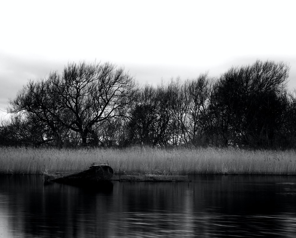 trees and grass beside body of water