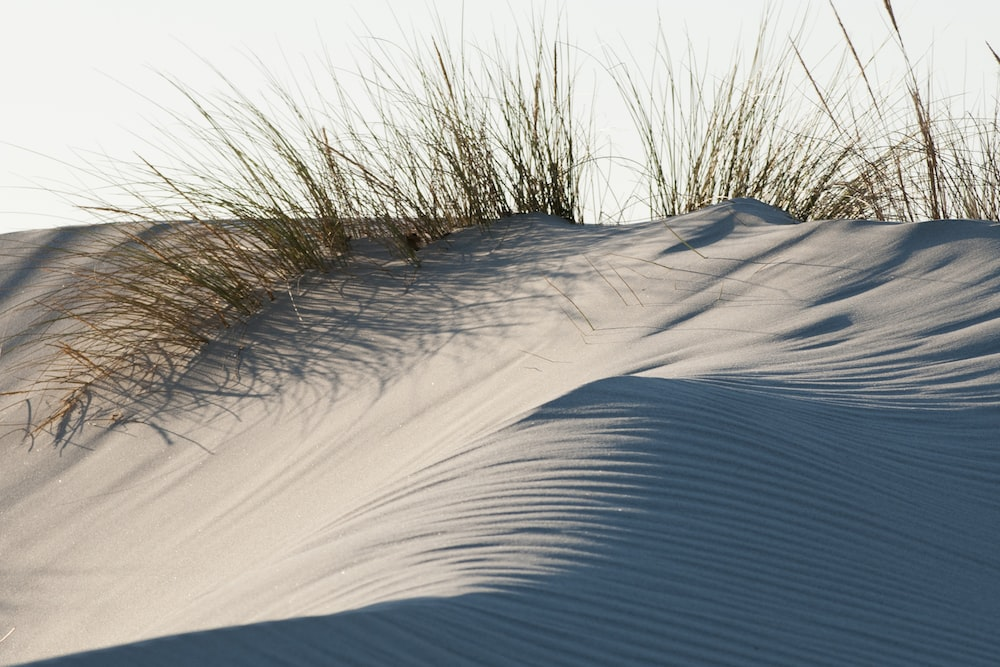 brown grasses on gray sand