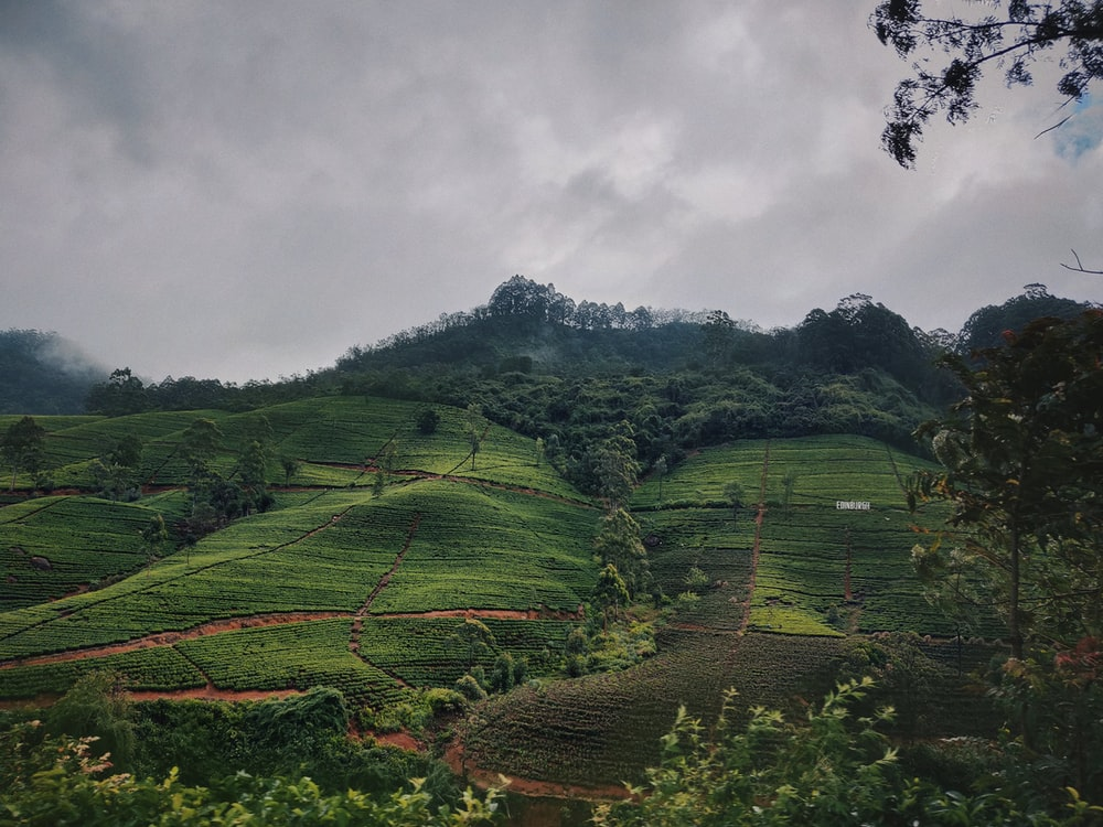 landscape photography of green field viewing mountain under white sky